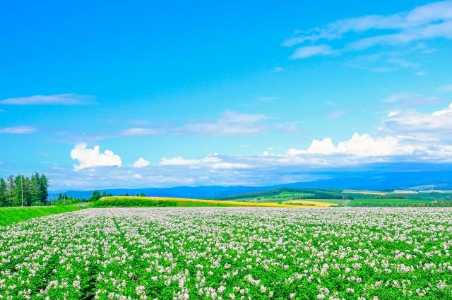 お花畑画像